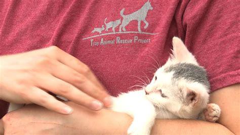 rescue alabama adopt animal rescue project autos post
