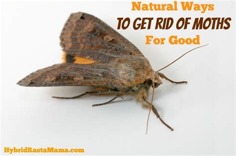 ways to get rid of moths for by hybrid rasta