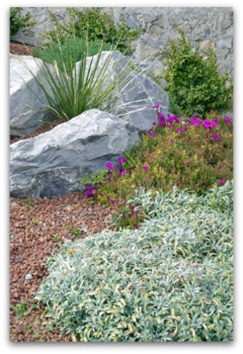 rock garden herbs rock garden herbs gardening ideas for rock