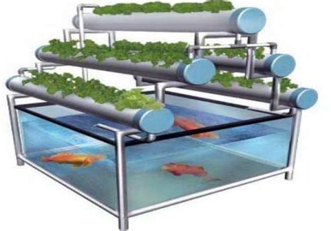 teknologi budidaya ikan  sistem aquaponik