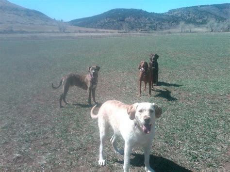 golden retrievers lyons co 55 best images about parks on parks quails and park in