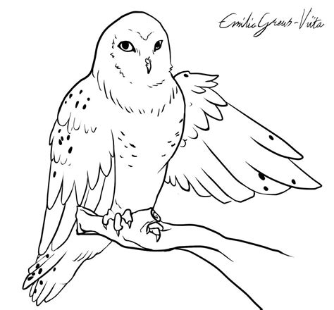 snowy owl coloring pages qlyview com