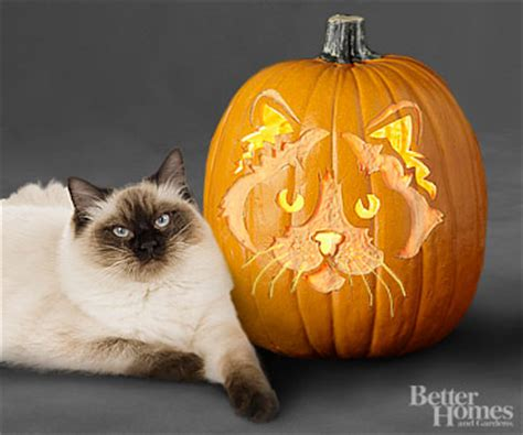 free pug pumpkin carving stencils free pumpkin carving patterns templates driven by decor