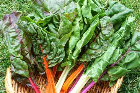 alimenti alcalini alimenti alcalini consigli per un ph equilibrato bio