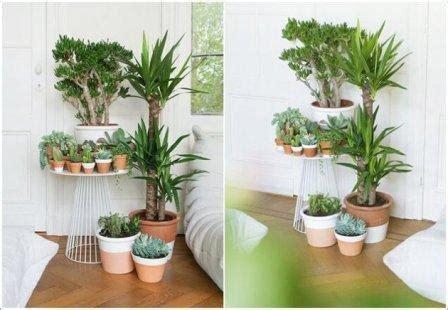 keuntungan memelihara tanaman  ruangan