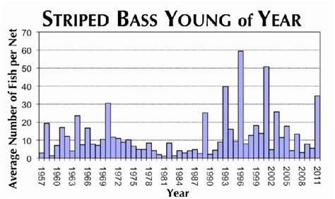 Maryland Juvenile Search Bay Journal Article Md Juvenile Striped Bass Numbers 4th Highest On Record