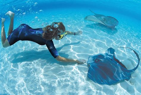 baby shark lalala swimming with the stingrays ocean rays pinterest