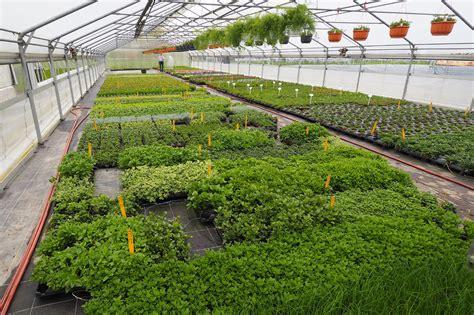 gärtnerei g 228 rtnerei blumen und pflanzen
