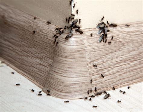 was tun gegen mücken in der wohnung was tun gegen ameisen in der k 252 che ocaccept