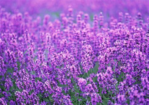 5 plants that will help you good night sleep