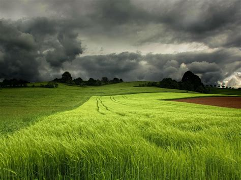 fields  wheat  stormy sky wide wallpaper