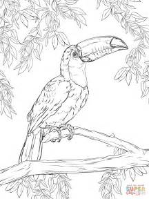 toucan coloring page toco toucan coloring page free printable coloring pages