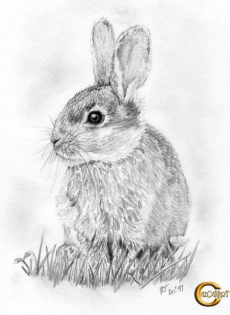 Rabbit Pencil Drawing