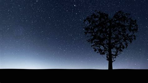 tree silhouette against starry night sky harmonia stars behind hill stock footage video 123565 shutterstock