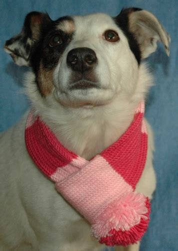 knitting pattern dog scarf dk dog scarf knits r us
