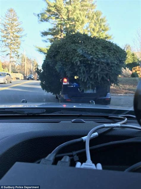 griswold car with christmas tree pics sudbury stop car with tree on top daily mail