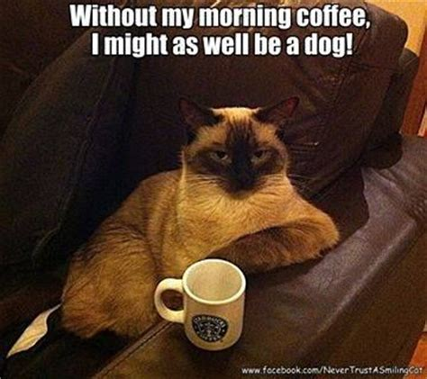 rk puppies and more morning coffee cats dogs and more cuties