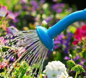 innaffiare fiori vacanza come lasciare le piante quando si va in vacanza passionando