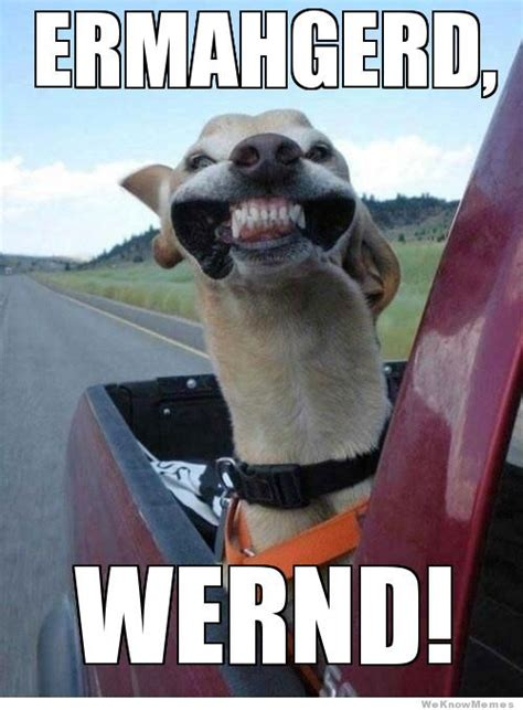Meme Ermahgerd - ermahgerd dog www imgkid com the image kid has it