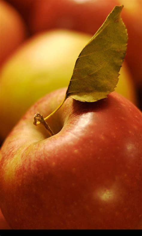 apple wallpaper apk apple wallpapers free apk android app android freeware