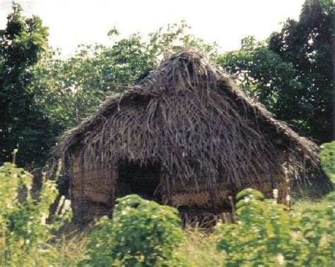 Grass Hut Tonga Photos Featured Pictures Of Tonga South Pacific