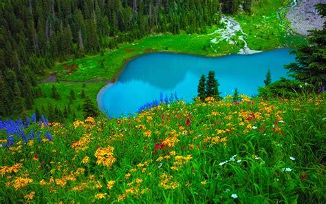 gorgeous turquoise blue lake green grass  yellow