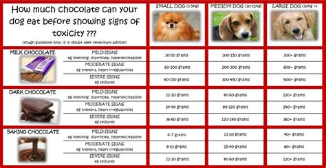 signs of chocolate poisoning in dogs danger chocolate resources to with veterinary