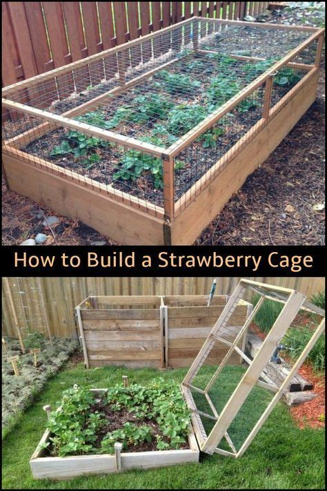 strawberries   critters  building