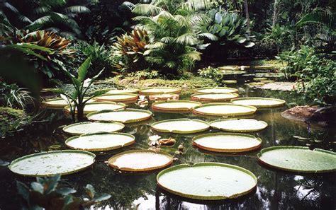Singapore Botanic Gardens Singapore Singapore Botanical Gardens A Visit Of Wondrous Nature