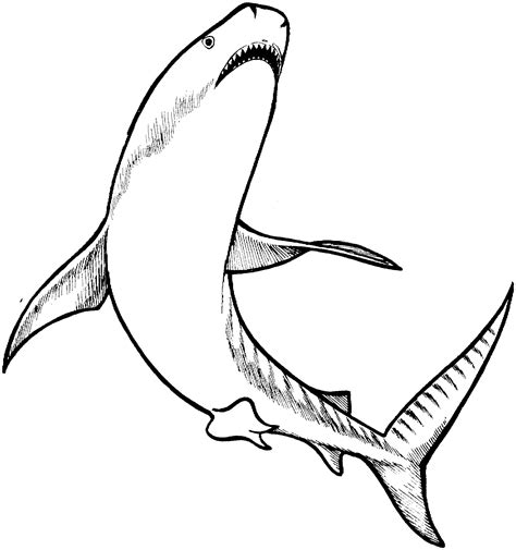 Tiger Shark Coloring Page | free shark coloring pages