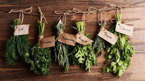 easy  grow plants   indoor herb garden