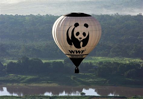H amp m and wwf launch children s collection to save endangered species lifegate