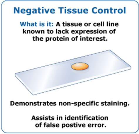 design an experiment that confirms the law of conservation of mass include tissue controls in every ihc experiment to instill