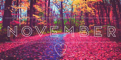 Photo Themes For November | organic blueberries from sunset valley organics november