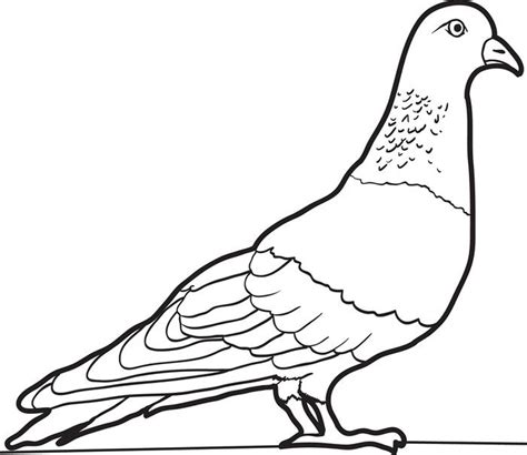images to color free printable pigeon coloring pages for
