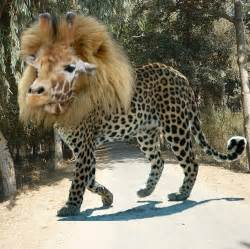Jaguar Mixed With Leopard Mix Hybrid Leopard Leopard Hybrid