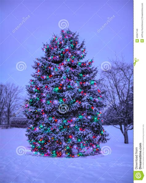 Twinkle Lights For Christmas Tree - christmas tree with lights outside in snow stock image image 43367149