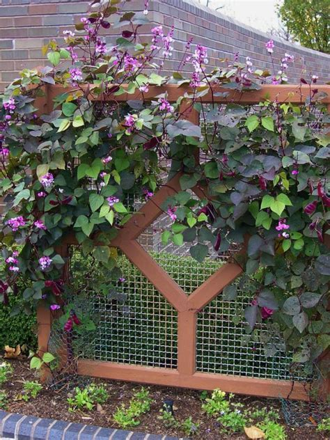 use fast growing plants to solve landscaping problems hgtv