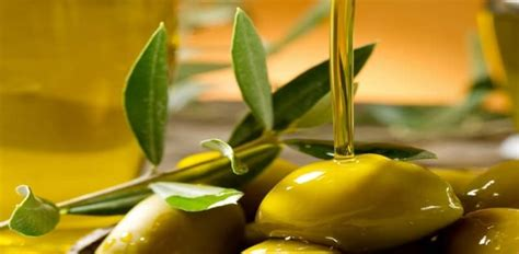 Minyak Goreng Zaitun Asli jual minyak zaitun olive impor asli