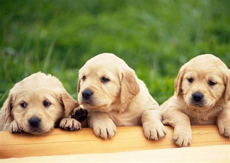 Dogs On by Category Dogs On Animal Picture Society