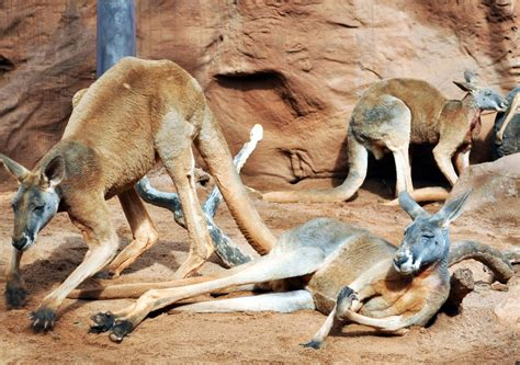 imagenes terrorificas de animales imagenes de animales hermosos del mundo