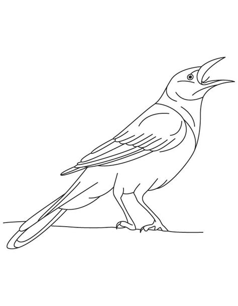 mynah bird coloring page hummingbird pictures to color az coloring pages mynah bird