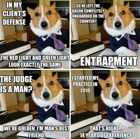Corgi Lawyer Meme - lawyer dog meme meme funny funny pictures dog meme