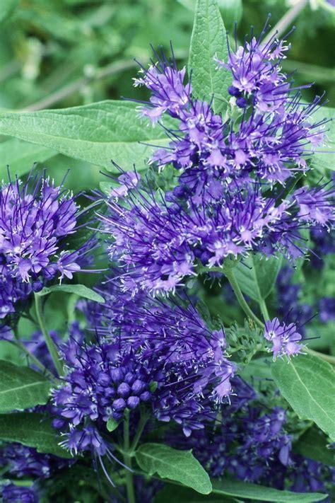 20 Best Fall Flowers & Plants   Flowers That Bloom in Autumn