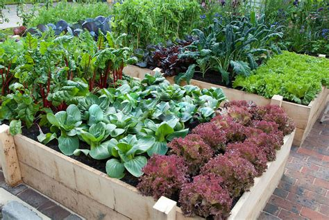 vegetable garden raised 7 gorgeous raised bed vegetable gardens