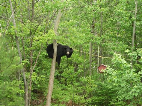 black bear and beehive birdhouse home garden decor birdhouses black bears and backyard food conflicts effective