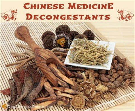decongestant for dogs traditional medicine decongestants