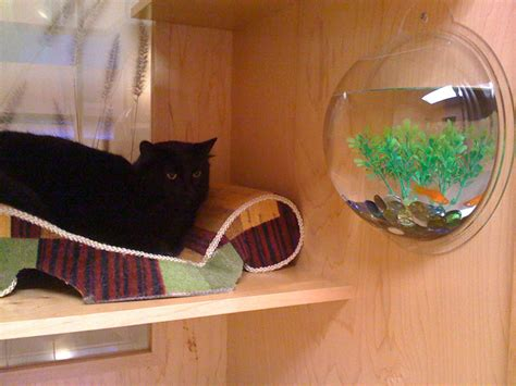 best little cat house pet travel tips for holidaying with your pet