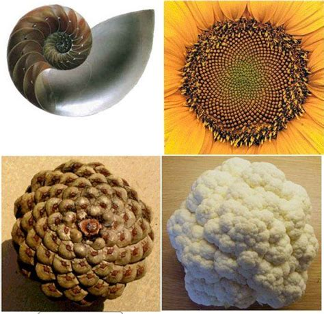 patterns throughout nature 119 best golden ratio phi pi fibonacci images on