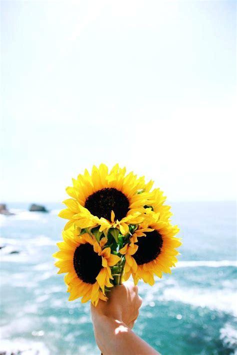 Sun Flower Phone For Iphone 5 sunflower wallpaper sunflowers and sea sunflower wallpaper